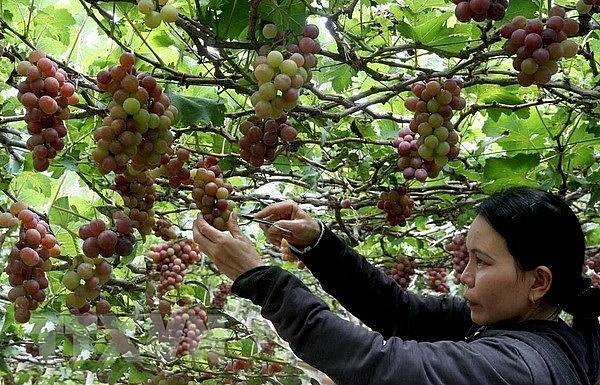 agri tourism development inevitable trend in vietnam