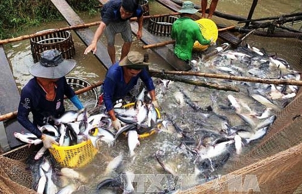 delta to boost tra fish quality