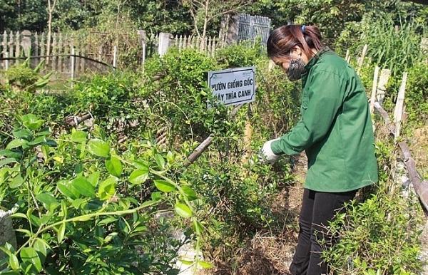 growing medicinal plants brings big profits
