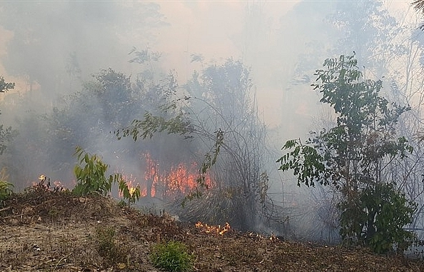hcm city increases patrols after forest fire threat