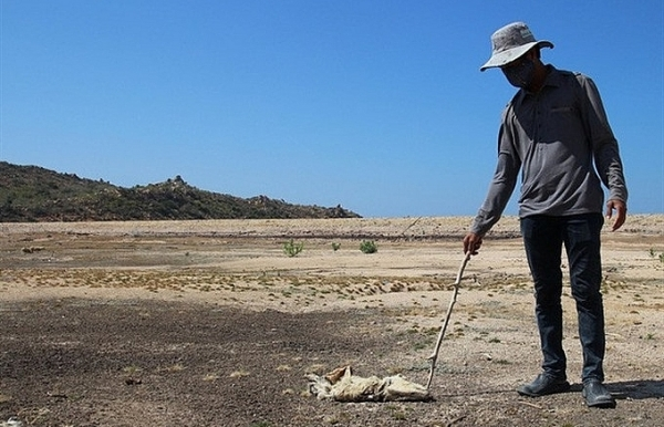 Ninh Thuan seeks support to fight drought