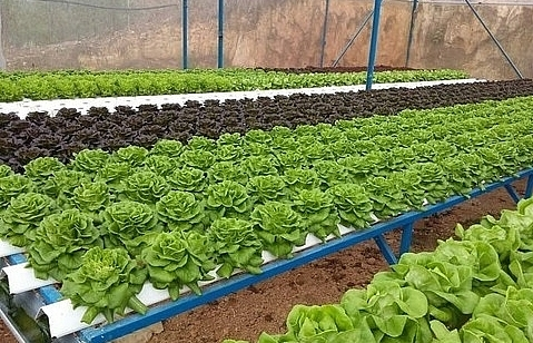 city to get high quality farm products