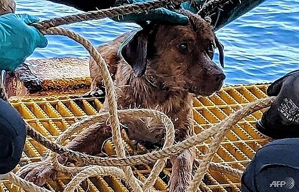 dog pulled from ruff seas 220km off thai coast to be adopted by rescuer