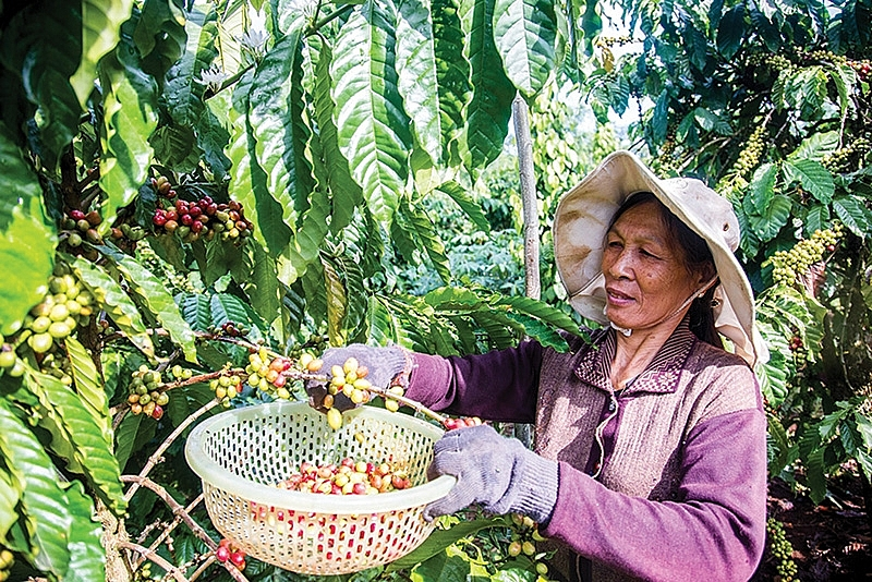 bayers contributions to a sustainable vietnam