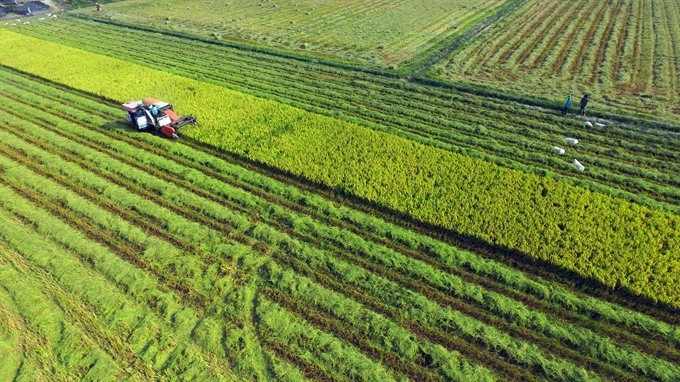 Japanese firms plan organic farms in An Giang