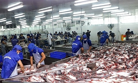 tra fish industry facing dangerous situation warn experts
