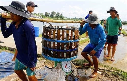 delta authorities improve management of tra fish breeding areas
