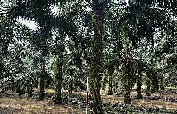 malaysia minister accuses eu of palm oil trade war