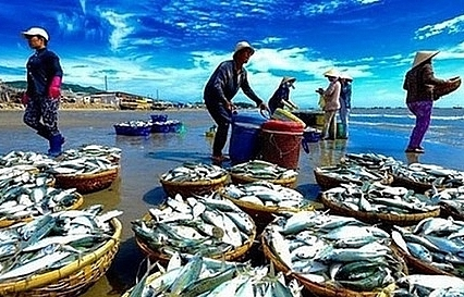seafood textile stocks soar thanks to good business performance