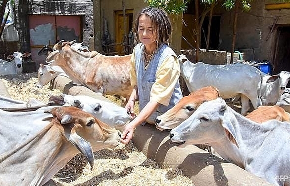german with 1800 cows allowed to stay in india