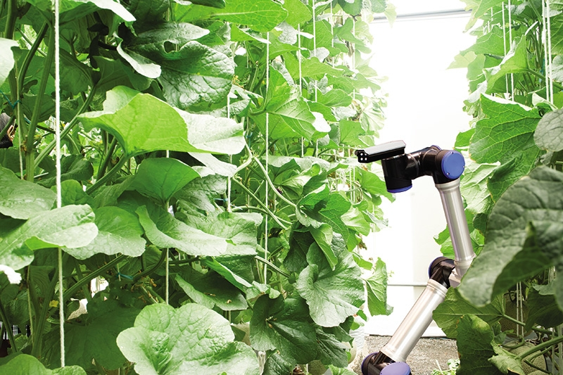 aspirations for an agricultural cycle of sustainability
