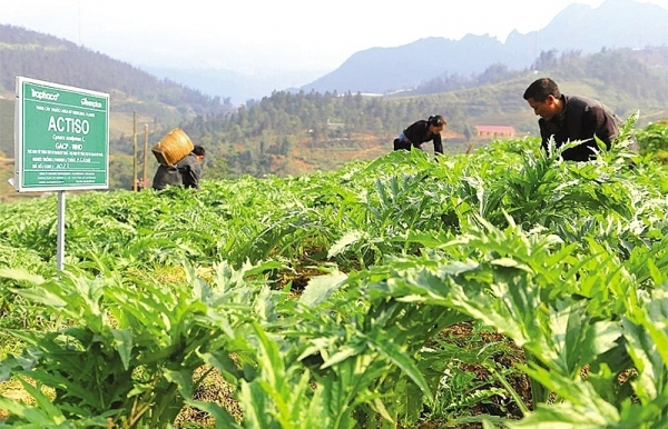 herbal cultivation for sustainability