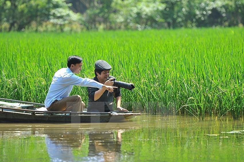 tam coc in harvest season dazzles visitors
