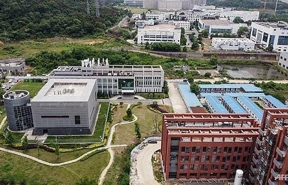 wuhan lab had three live bat coronaviruses chinese state media
