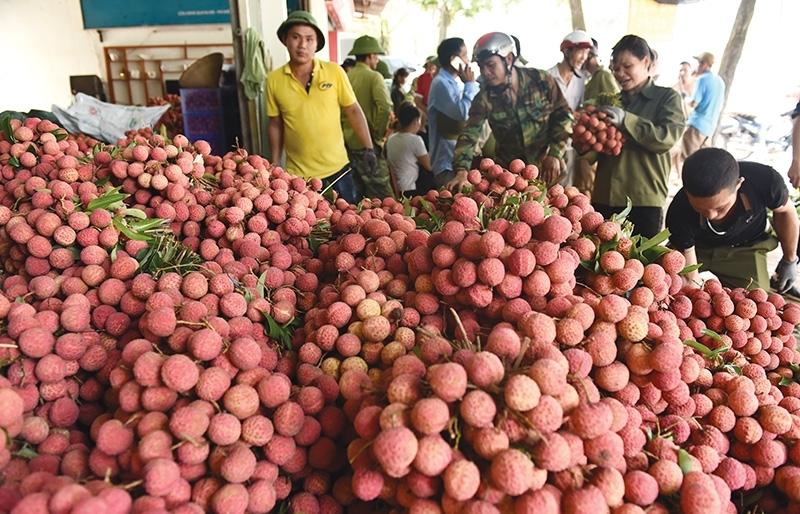 lychee going digital thanks to vietrades online tie ups