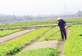 ha tinh reaps harvest from market projects