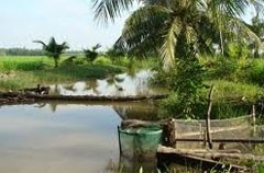 mekong needs bio diversity preservation