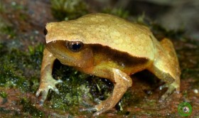 russian scientists discover new toad species in vietnam