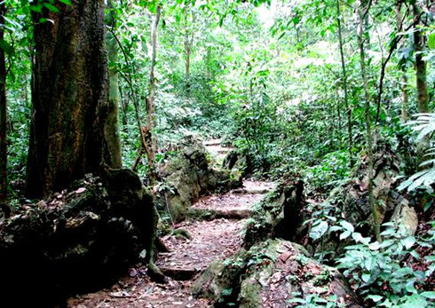 eight forests suitable for nature enthusiasts in vietnam hinh 0