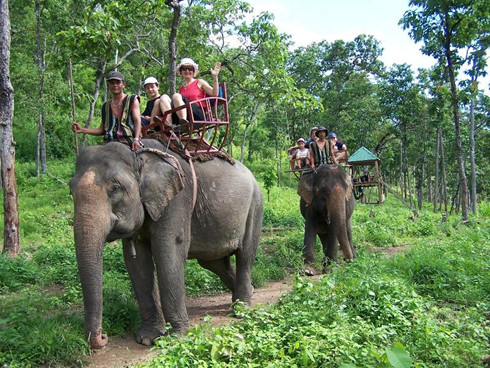 eight forests suitable for nature enthusiasts in vietnam hinh 4