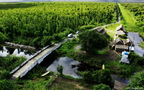 eight forests suitable for nature enthusiasts in vietnam hinh 7