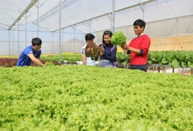 Farm tours in Da Lat attract tourists