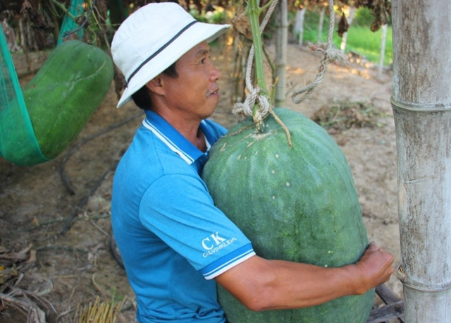 binh dinh villages giant winter melons