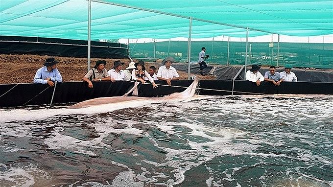 kien giang to shift rice fields to aquaculture