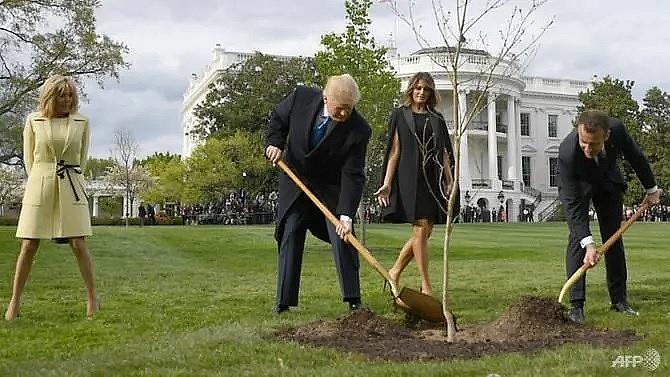 tree symbolising trump macron friendship has died