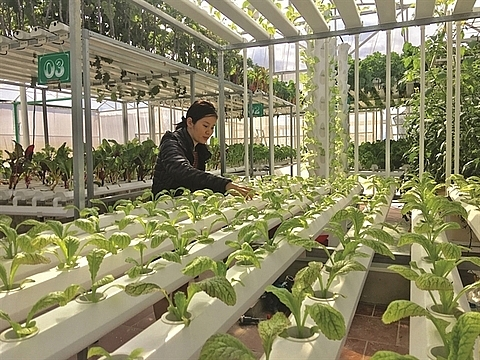 central province approves hi tech farming project
