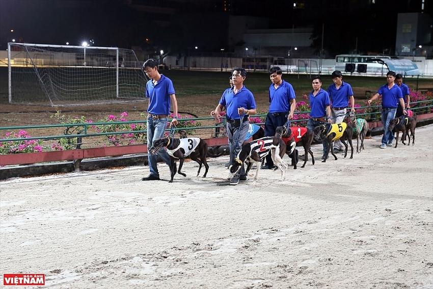 dog racing in vung tau photo