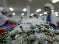 seafood firms cornered as inputs flow to china