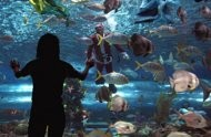 1500 aquarium fish corals seized at manila pier