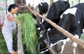 development windows open for dairy firms