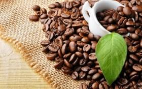 Starbucks to sell Da Lat Arabica coffee globally