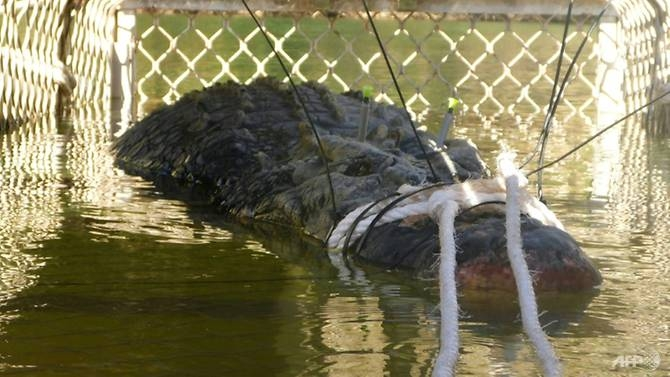 australia monster croc caught after eight year hunt