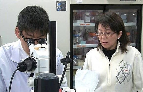 japan to start worlds first human trial using stem cell to treat parkinsons