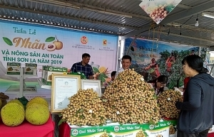 son la longan and safe farm produce week 2019 launched in hanoi