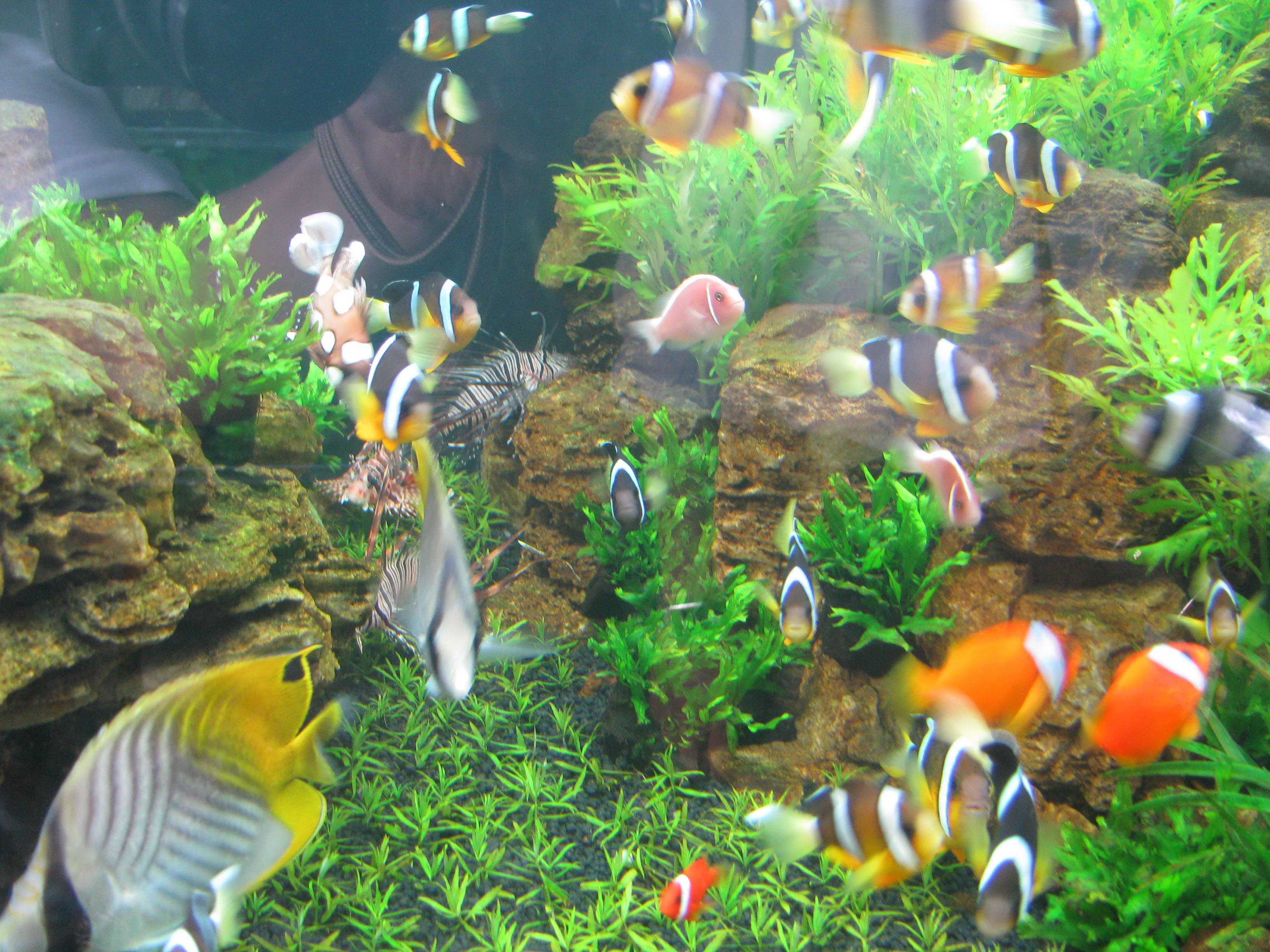 Hcmc exports 5 million ornamental fish investing funds for Ornamental fish
