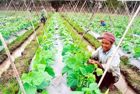 mekong farmers switch to lucrative alternatives
