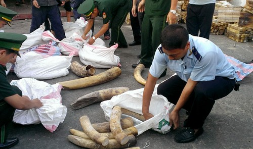 da nang customs detect tons of wildlife parts stashed in red bean shipment