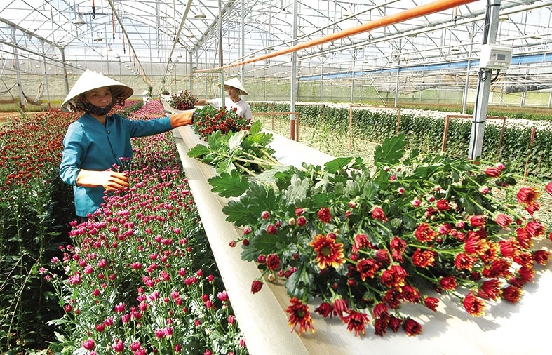 vietnam aims to facilitate agriculture investment