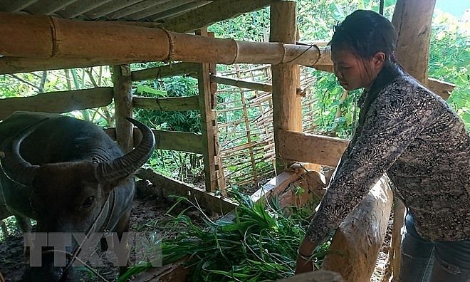 thuathien hue spends 11 million usd to support mountainous locals