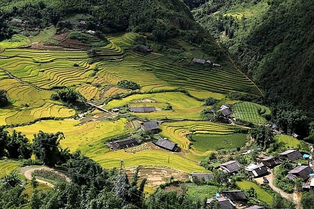 fansipan in charming rice season