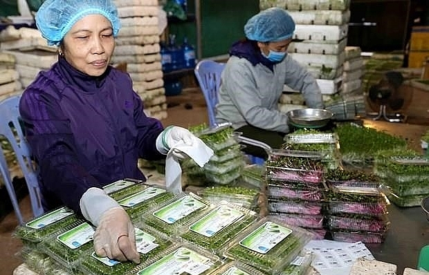vietnam takes measures to prevent trade frauds