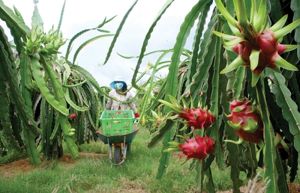agriculture capitalising from private investment