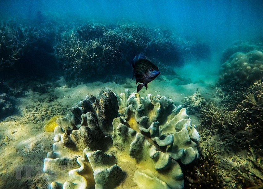 beauty of coral reefs in ninh thuan province