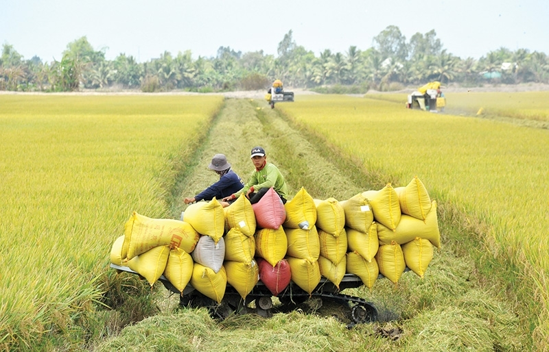 Crisis adds to modernisation of Vietnam's labour structure