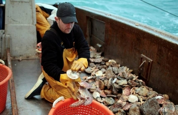 french navy ready to intervene in scallops row with uk fishermen