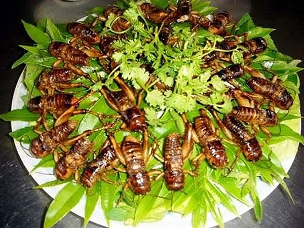 biting into the bugs really is a must try dish for those who visit son la